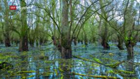 Video «Unsere Wälder: Im Reich des Wassers (3/3)» abspielen