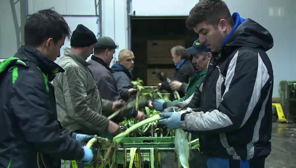 Bauernstreit um Masseneinwanderung