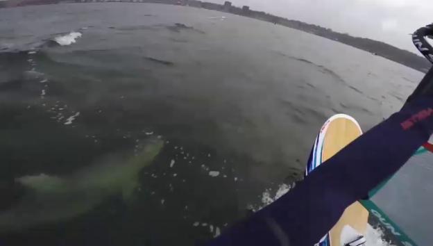 Video «Delfine begleiten Windsurfer in Ostsee (unkomm.)» abspielen
