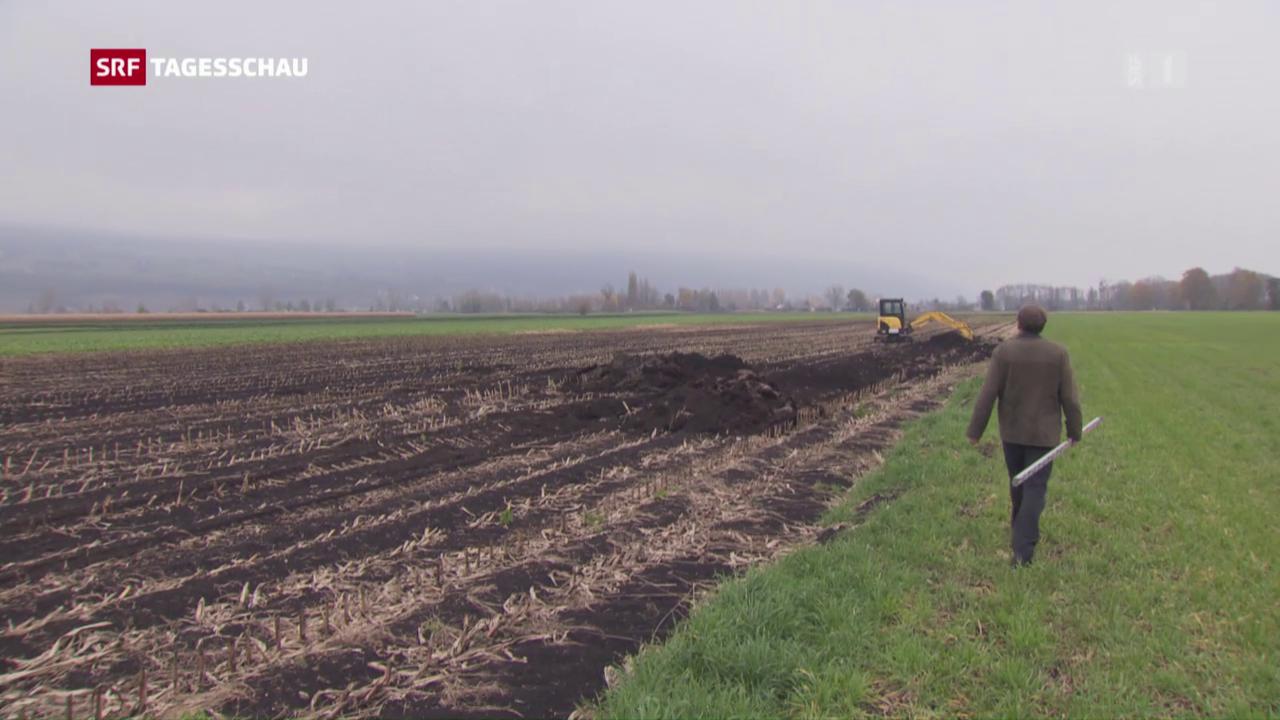 Torfböden: Anbau auf Kosten von Steuerzahlern und Natur