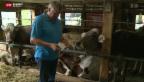 Video «Bauer verliert 20 Kühe wegen Tuberkulose-Verdacht» abspielen