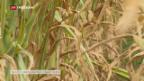Video «Bauern fordern Unterstützung» abspielen