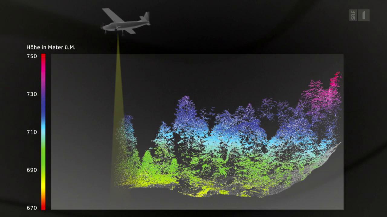 Mit 3D-Scannern den Schweizer Wald besser nutzen