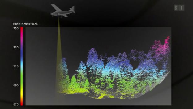 Video «Mit 3D-Scannern den Schweizer Wald besser nutzen» abspielen