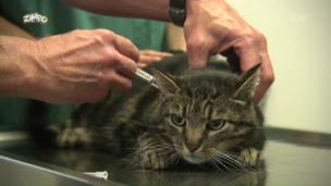 Video «Was erlebt ein Tierarzt in seiner Praxis?» abspielen