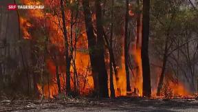 Video «Kampf gegen die Flammen in Australien geht weiter» abspielen