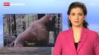 Laschar ir video «M13 sajettà telesguard»