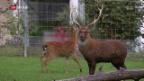 Video «Selektion im Wildtierpark» abspielen