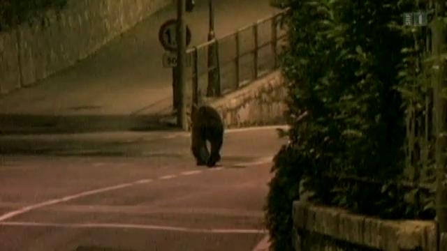 Bär ohne Grenzen