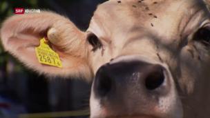 Video «FOKUS: Serie «Maschinen unter uns»: Künstliche Intelligenz in der Landwirtschaft» abspielen