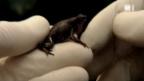 Video «Die Frosch-Arche» abspielen