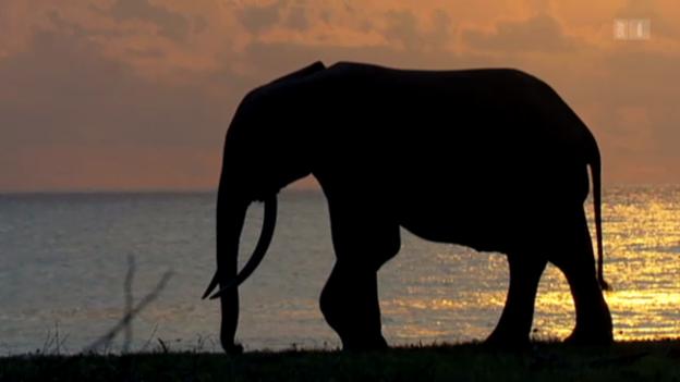 Video «Kongo – Das starke Herz der Wildnis» abspielen