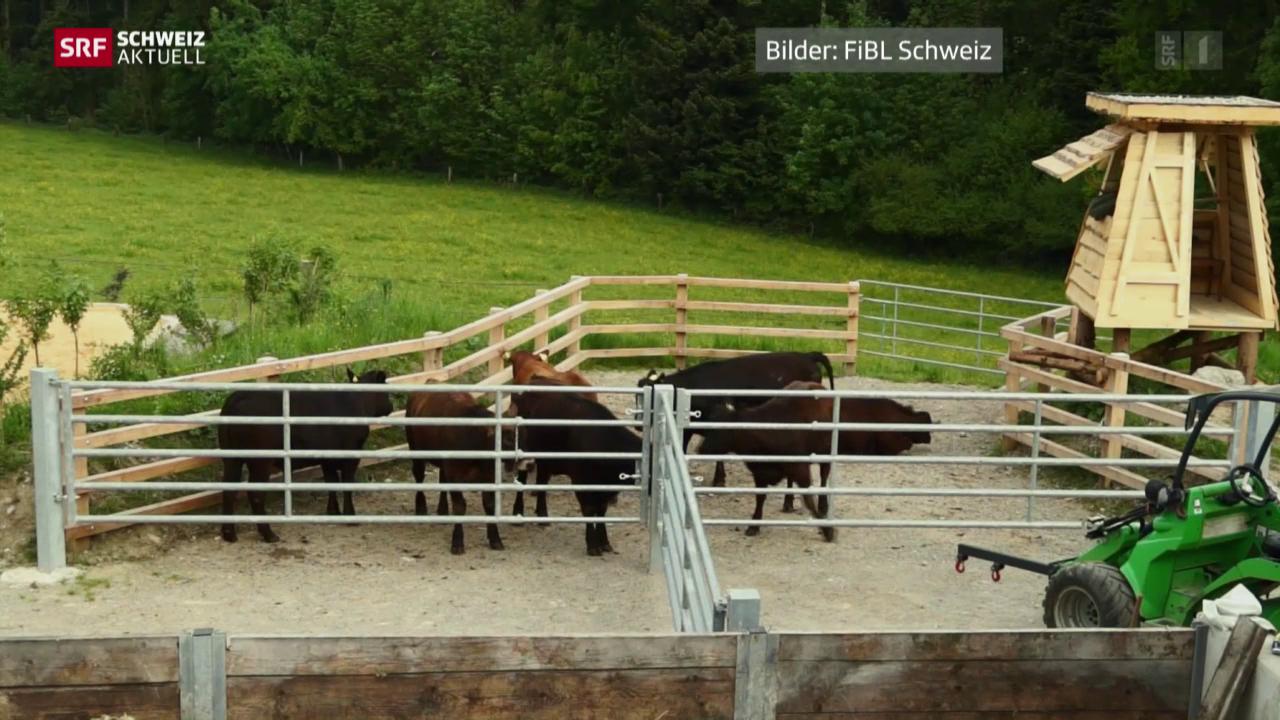 Sonderbewilligung für Weide-Schlachtung