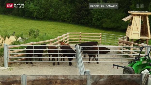 Video «Sonderbewilligung für Weide-Schlachtung» abspielen