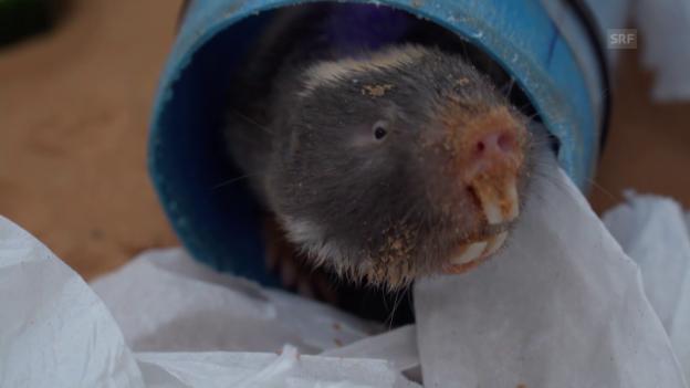 Video «Tiere unter Beobachtung» abspielen