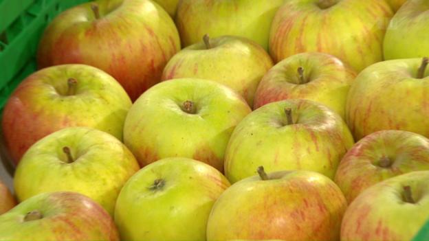 Video «Pestizid in Schweizer Äpfeln: Spritzen fürsmakellose Aussehen» abspielen