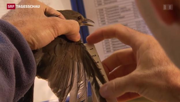 Video «Herbstzeit – Faszination Vogelzug» abspielen