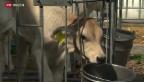 Video «Bauernbetriebe im Wandel» abspielen