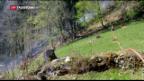 Video «Erhebliche Waldbrandgefahr» abspielen