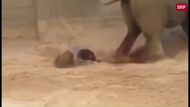 Video «Das Elefantenbaby ist da!» abspielen