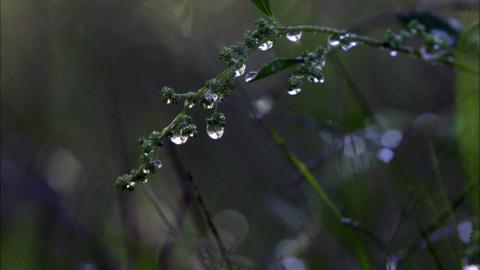 H2O - Kreislauf des Wassers: Die globale Wasserkrise (2/3)