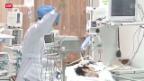 Video «Vogelgrippe-Virus weiter auf dem Vormarsch» abspielen