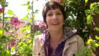 Video «Gärtnernd: Sabine Reber ist mit grünem Daumen geboren» abspielen
