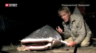 Streit um grossen Fisch