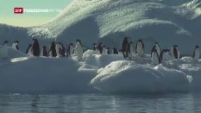 Video «Meeresschutzgebiet in der Antarktis» abspielen