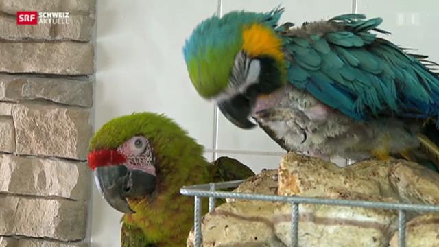 Altersheim für Papageien