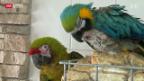 Video «Altersheim für Papageien» abspielen