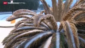 Video «Eis- und Schneesturm legt USA lahm» abspielen