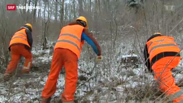 Video «Tagesschau vom 20.01.2013, 19:30» abspielen