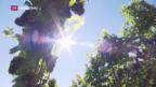 Video «Ausblick auf nächsten Weinjahrgang» abspielen