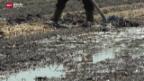 Video «Ernteausfälle wegen Dauerregen» abspielen
