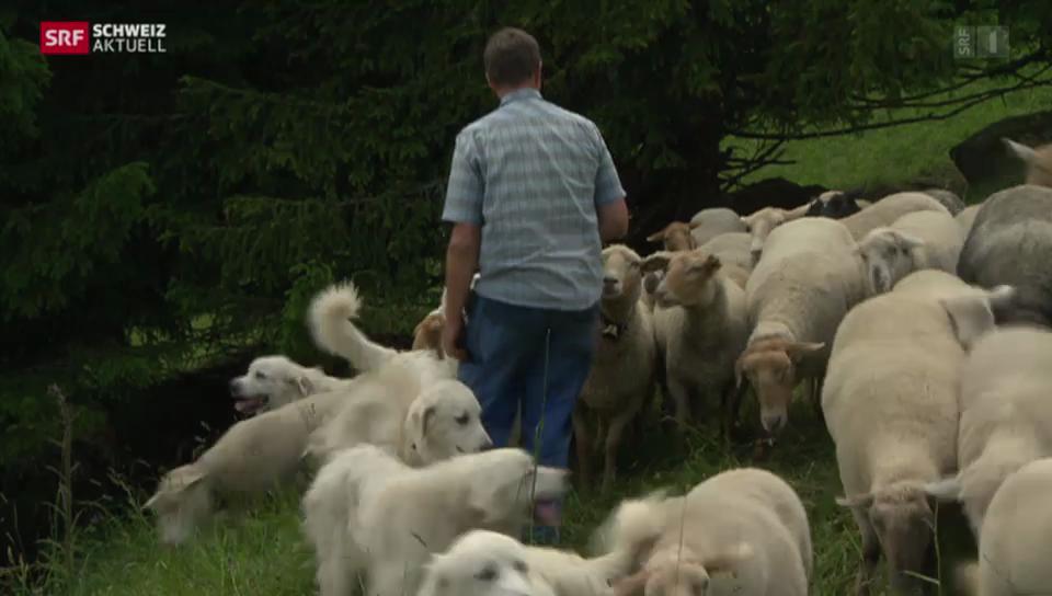 Die unbeliebten Schafbeschützer
