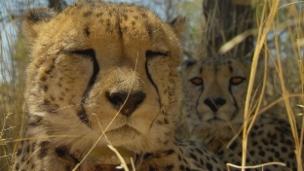 Link öffnet eine Lightbox. Video Gepardin Pride wird genäht abspielen.
