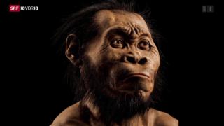 Video «Homo Naledi» abspielen