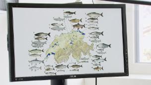 Video «NETZ NATUR «Stimme für die Fische» (Schweizerdeutsch)» abspielen