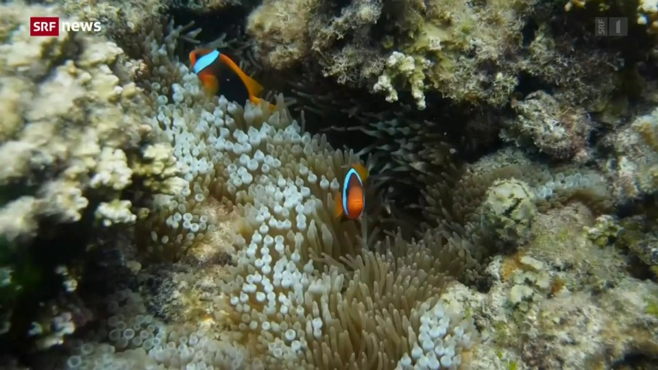 Great Barrier Reef kein «bedrohtes» Welterbe