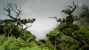 Link öffnet eine Lightbox. Video Wildes Sri Lanka – Waldwelt (2/3) abspielen.