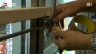 Video «Zürcher Tankstellen: Keine Tiefkühlpizza nach ein Uhr» abspielen