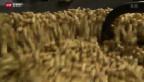 Video «Traumberuf Nüssliröster – seit 70 Jahren» abspielen