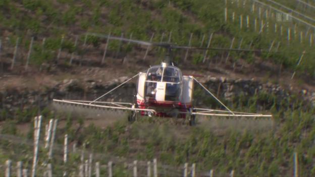 Video «Illegaler Pestizideinsatz: Behörden schauen weg» abspielen