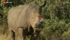 Video «Wilderei von Nashörnern» abspielen