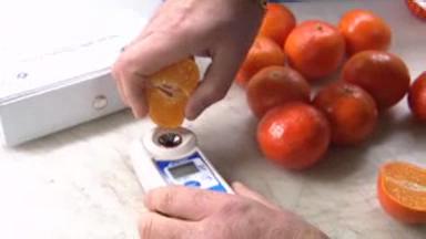 Video «Mandarinen: Gift-Cocktail in den Zitrusfrüchten» abspielen