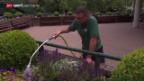 Video «Tennis: Wimbledon, Ruhe am «Middle Sunday»» abspielen