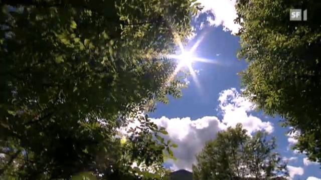 Die Schweiz verwaldet