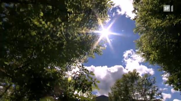 Video «Die Schweiz verwaldet» abspielen