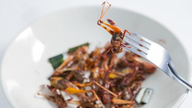 Video «Insekten essen statt Fleisch?» abspielen
